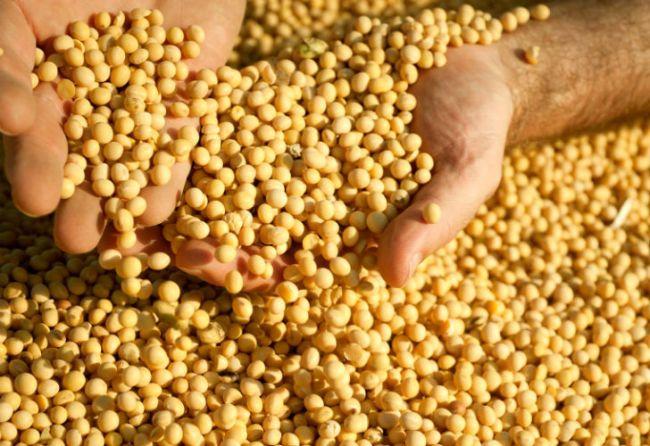 Los riesgos actuales del negocio de la soja