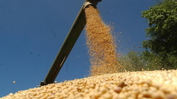 Soja: subas, en el día después del USDA