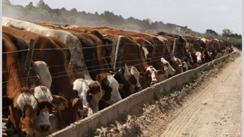 Cambio de estructura: Agroindustria aprobará ahora exportaciones de Cuota Hilton