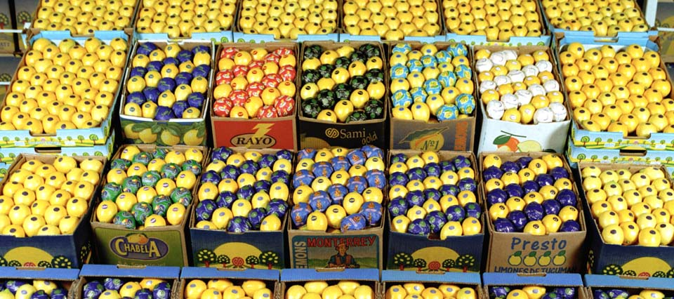 Ahora sí: Estados Unidos autorizó definitivamente el ingreso de limones argentinos