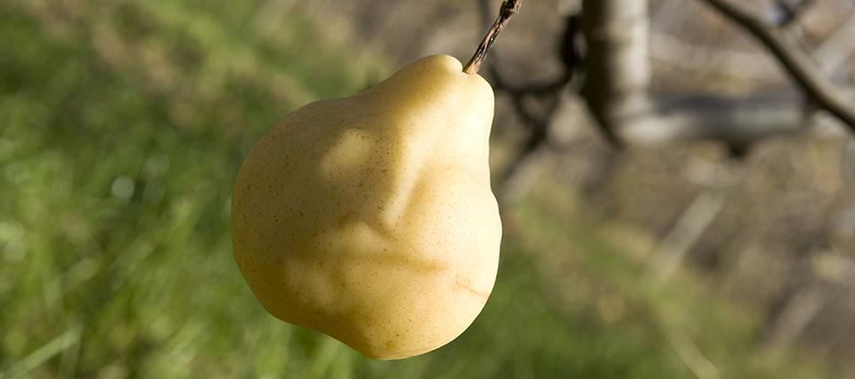 El Gobierno impulsa un proyecto de ley para otorgar beneficios fiscales a productores frutícolas