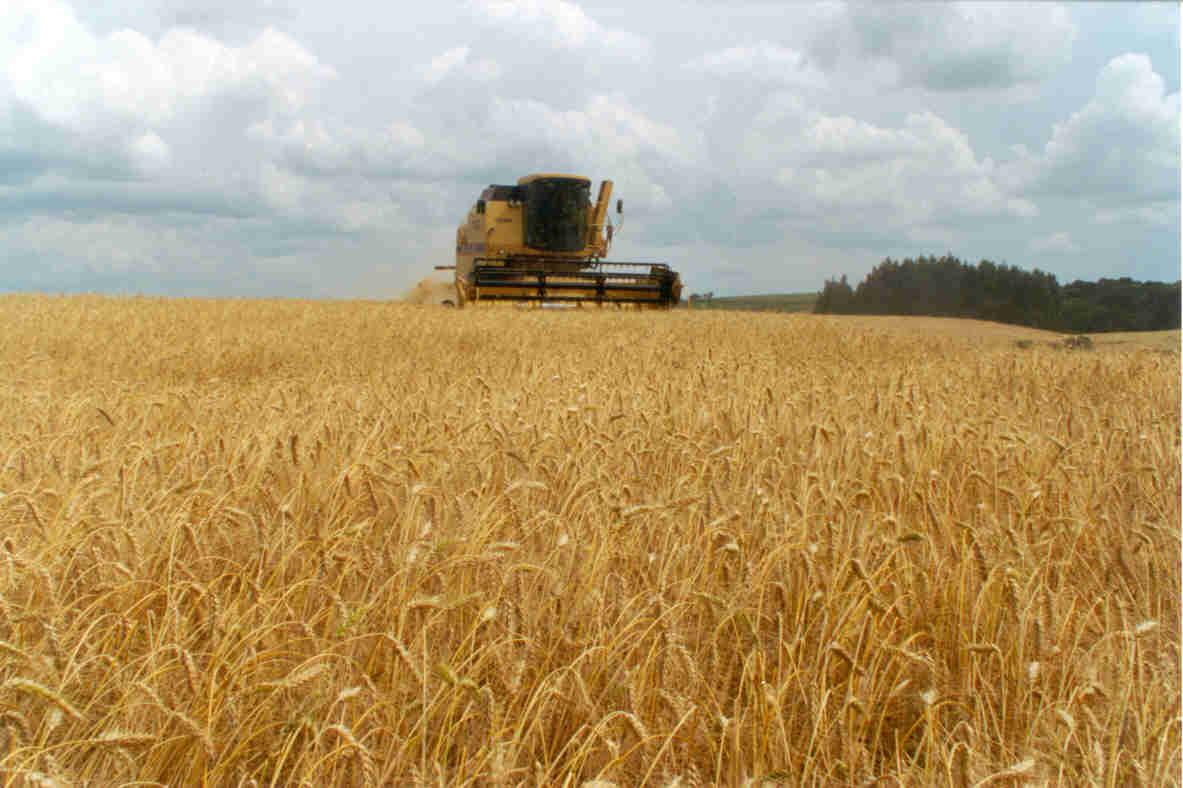La exportación de trigo va rumbo a alcanzar un nuevo récord